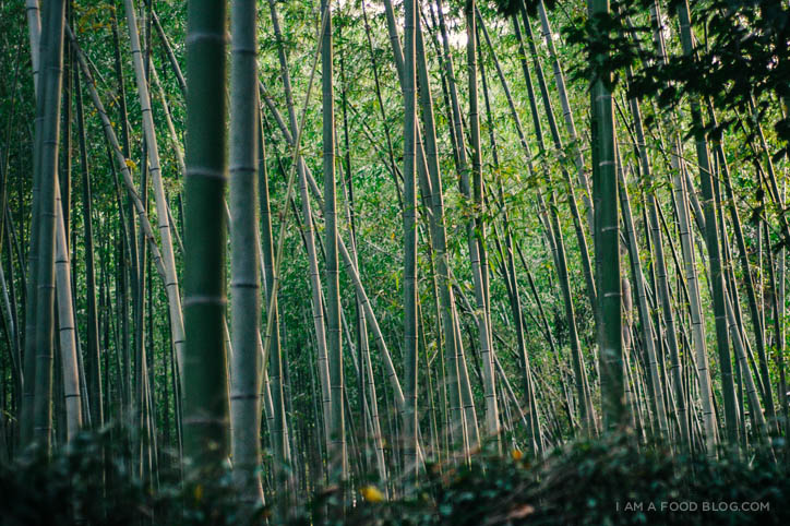 ARASHIYAMA, THE BAMBOO FOREST.
