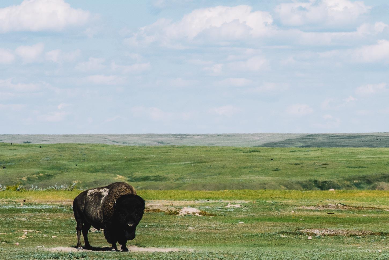 Grasslands National Park Camping